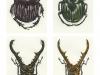 Temujin Baldori, Beetles